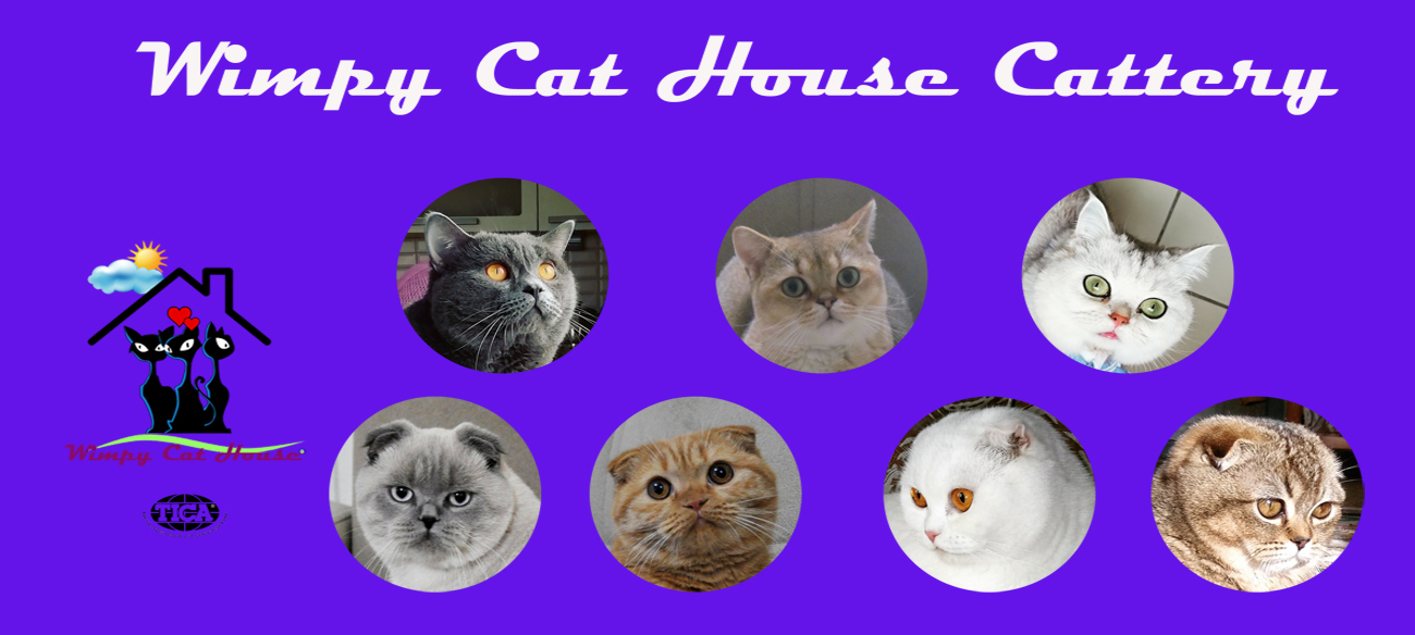 Wimpy Cat House